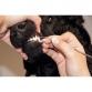 Стоматологический скалер безопасный, Show Tech Toothscaler Safety